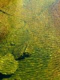 Acqua di mare colorata Fotografia Stock