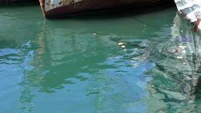 Acqua di mare inquinante del turchese del bacino archivi video