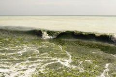 Acqua di mare sporca in pieno di alga Fotografie Stock Libere da Diritti