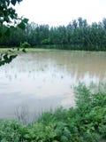 Acqua di pioggia nei campi fotografie stock libere da diritti