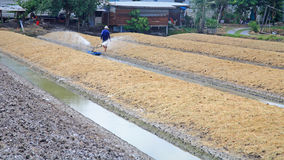Acqua di spruzzatura dell'agricoltore dalla fossa da coltivare Fotografie Stock