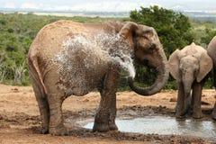 Acqua di spruzzatura dell'elefante Immagini Stock Libere da Diritti