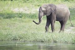 Acqua di spruzzatura dell'elefante africano al foro bevente Immagini Stock Libere da Diritti