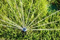 Acqua di spruzzatura della testa dell'irrigatore automatica sopra erba verde Immagini Stock Libere da Diritti