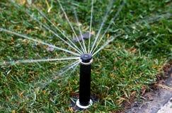 Acqua di spruzzatura della testa dell'irrigatore su prato inglese verde Immagine Stock