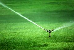 Acqua di spruzzatura dello spruzzatore su erba verde fertile Fotografie Stock Libere da Diritti