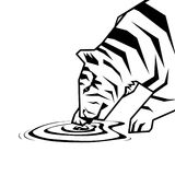 Acqua di tocco della tigre Fotografie Stock Libere da Diritti