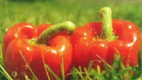 Acqua di versamento sui peperoni dolci rossi video d archivio