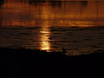 Acqua dorata con l'egretta ed il chiurlo fotografie stock