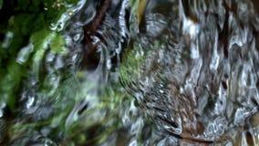 Acqua fredda che entra a partire dalla molla in ruscello del chiacchierio della foresta nel legno stock footage