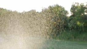 Acqua frizzante che spruzza dallo spruzzatore sul prato inglese verde Giardinaggio di estate Movimento lento stock footage