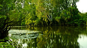 Acqua gialla Fotografie Stock Libere da Diritti