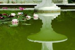 Acqua - gigli Fotografia Stock Libera da Diritti