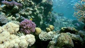 Acqua libera Operatore subacqueo e pesci stock footage