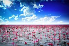 Acqua lilly sul lago Fotografia Stock Libera da Diritti