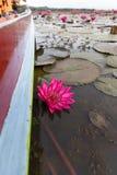 Acqua Lily Lake di Thale Noi Immagine Stock Libera da Diritti