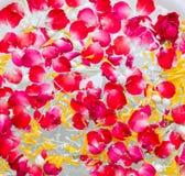 Acqua mista con profumo ed i fiori vivi Fotografia Stock