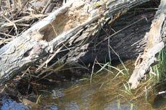 Acqua nel castoro Creeк 2 fotografia stock