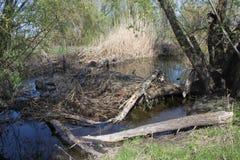 Acqua nel castoro Creeк 2 immagine stock