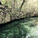 Acqua nella giungla Immagini Stock