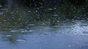 Acqua nella palude stock footage