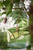 Acqua organica del cetriolo Fotografia Stock Libera da Diritti