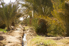 Acqua per l'oasi Fotografie Stock Libere da Diritti