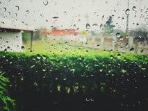 Acqua piovana, isola di vetro dopo pioggia, con le immagini vaghe, giardini pubblici fotografia stock libera da diritti