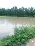 Acqua piovana sui campi verdi Fotografia Stock