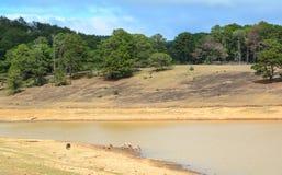 Acqua potabile dei cavalli selvaggii in Dalat, Vietnam Fotografia Stock
