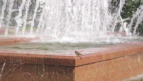 Acqua potabile dei piccioni da una fontana archivi video