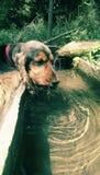 Acqua potabile del cane Fotografie Stock