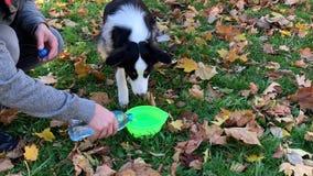 Acqua potabile del cane in parco stock footage