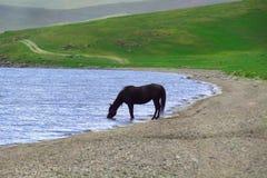 Acqua potabile del cavallo dal lago immagini stock libere da diritti