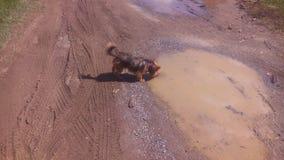 Acqua potabile del cucciolo Fotografia Stock