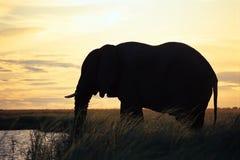 Acqua potabile dell'elefante Fotografia Stock Libera da Diritti