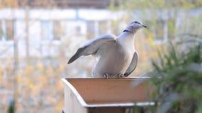 Acqua potabile della tortora Uccello nella città archivi video