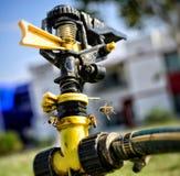 Acqua potabile delle api Fotografia Stock