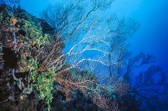 Acqua profonda Gorgonian subacqueo fotografia stock