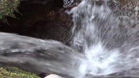 Acqua rapida profonda sul parco di stato dell'insenatura del campo delle cascate della forcella della poltiglia & sulla foresta,  video d archivio