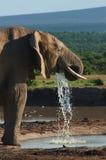 Acqua sbavante dell'elefante Fotografia Stock Libera da Diritti