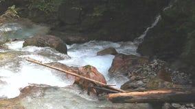 Acqua selvaggia in una gola stock footage