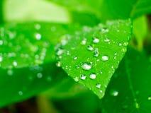 Acqua su una foglia della pianta fotografie stock libere da diritti
