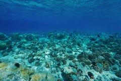 Acqua subacquea della radura del pavimento dell'oceano Pacifico immagini stock libere da diritti