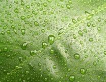 Acqua sul foglio 1 fotografie stock