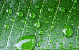 Acqua sulle foglie Immagine Stock Libera da Diritti