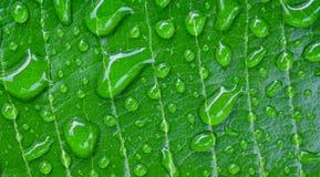 Acqua sulle foglie Fotografie Stock Libere da Diritti