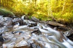 Acqua tempestosa di un fiume della montagna nel fuoco selettivo della foresta Immagini Stock Libere da Diritti