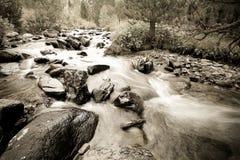 Acqua tempestosa di un fiume della montagna nel fuoco selettivo della foresta Immagine Stock