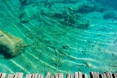 Acqua trasparente del lago con il pesce Immagine Stock Libera da Diritti